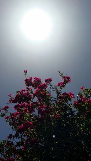 Natural Light And Shadow Effect No Filter Beautiful Day EyeEm Best Shots EyeEm Nature Lover West Indies