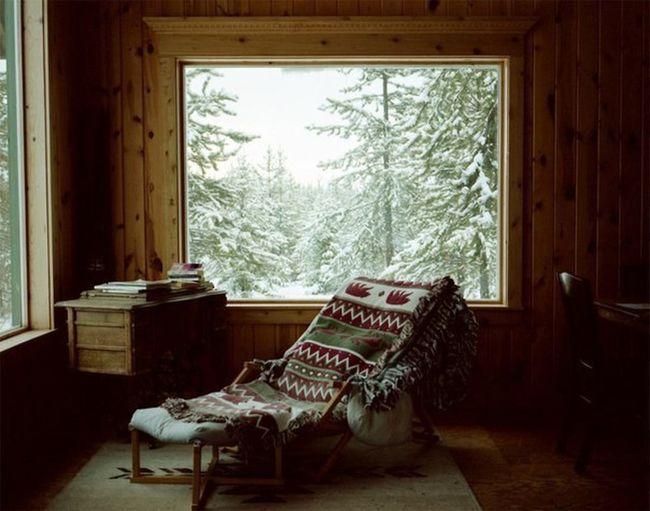 Window Indoors  Home Interior No People Tree Day