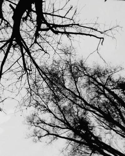 Taking Photos Trees And Sky Nature Taking Photos Blackandwhite Photography
