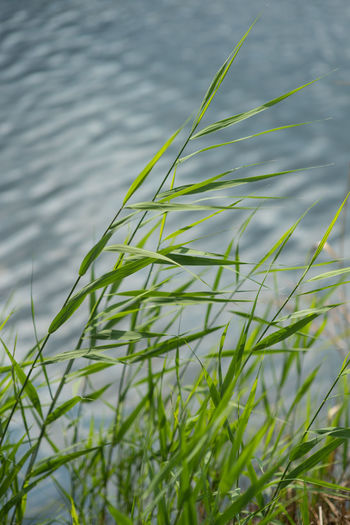 High angle view of grass by lake