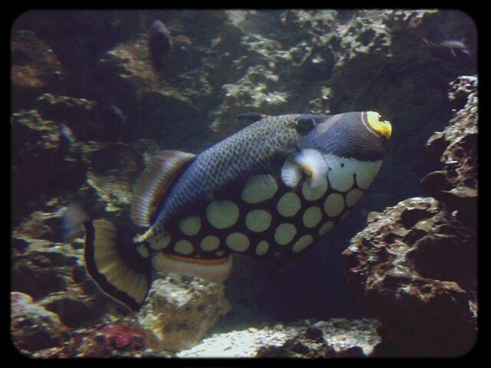 Taking Photos Animal_collection Fish Artis