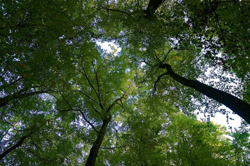 Forest Roof Beauty In Nature Branch Day Forest Green Color Low Angle View Nature No People Plant Scenics - Nature Tree Tree Canopy