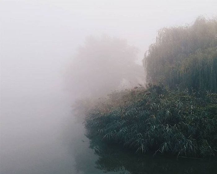 F is for fog. ☁VSCO Vscocam Vscobeau Vsconature Shotsofresh Vscovisuals Visualsoflife Vscohungary 9vaga_skyandviews9 Vscosweden Vscorussia Vscorus Forest Lake Mik Tv_landscapes Mist_bestshots 9vaga_dailytheme9 Rsa_ladies Soundofcountry Landscape Tv_travel Tv_living Transfer_visions Mistyfoggymilkymoody transfer_visions_nm2 travelerinhungary hiyapapayaphotoaday mist_vision 9vaga_dt_white9