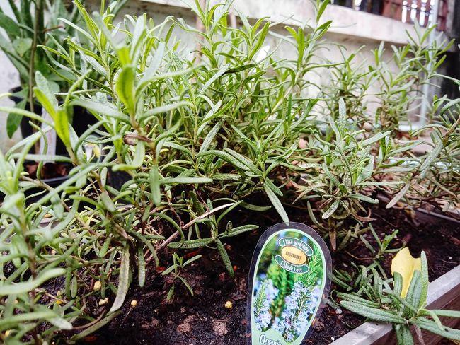 Plants 🌱 ต้นไม้สวย ต้นไม้ ปลูก สวน Garden Leaf Greenhouse Close-up Plant Green Color