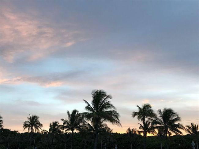 Florida Sunset Sunset Colors Palm Tree Silhouette