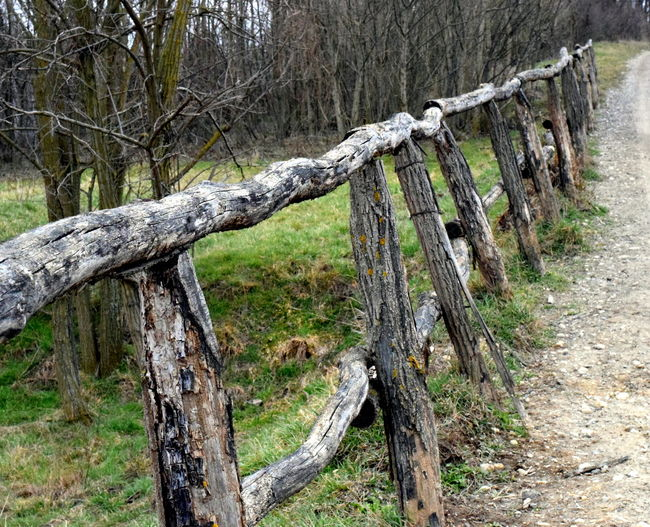 Old wooden fence. Old Fence Road Wooden Fence Bare Tree Branch Collapsing Day Dead Tree Fence Forest Lopsided Nature Next To The Road No People Old Wood Outdoors Rural Area Sky Sloping Tranquility Tree Tree Trunk Wood - Material Worn Fence