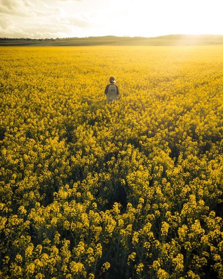 Smell the Canola Canola Mavic Pro Dji Global Australia & Travel Explore Australian Landscape Nikon Luxlusive Australia Nsw Field Land Landscape Beauty In Nature Plant Yellow Agriculture Nature Environment Farm Flower One Person Tranquility Sunlight Tranquil Scene