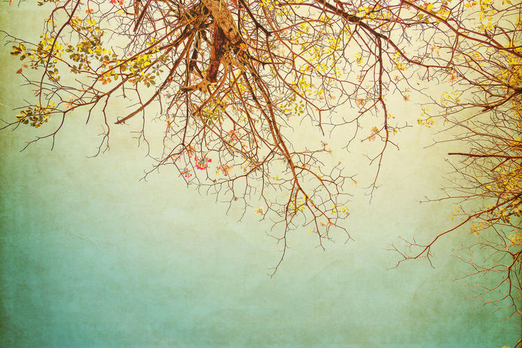 nature of vintage tree flower in summer ,paper art texture Tree Branch Beauty In Nature Day Autumn Outdoors Bare Tree Fog Scenics - Nature Sky Textured Effect Tranquil Scene Vintage Art Photo Poscards Old