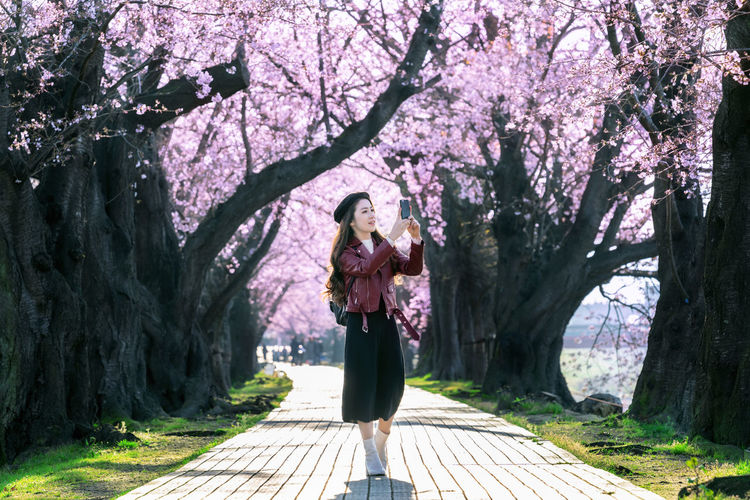 Young woman walking in cherry blossom garden on a spring day. Row cherry blossom trees in Kyoto, Japan Plant Tree One Person Full Length Springtime Nature Flower Growth Adult Women Young Adult Flowering Plant Day Casual Clothing Beauty In Nature Standing Leisure Activity Tree Trunk Trunk Outdoors Hairstyle Cherry Blossom Cherry Tree Beautiful Woman