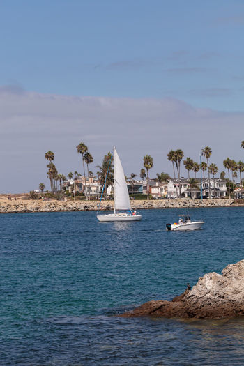 Sailboat and a motorboat leaving the harbor in Corona del Mar, California in summer Arrival Boat Ride California City Cityscape Corona Del Mar Day Harbor Landscape Motorboat No People Ocean Outdoors Palm Tree Sailboat Sailboats Sea Travel Destinations Vacations Water