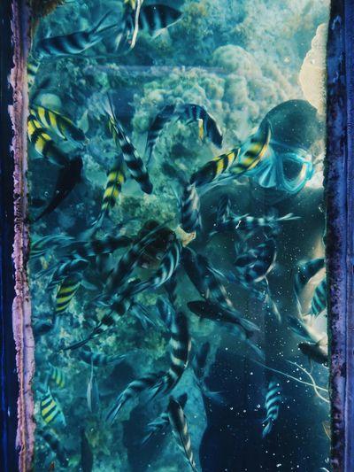 Indian ocean, Kenya. Fish Swimming Snorkeling Nature Sea Life Water UnderSea Underwater Photography Underwater World Diving Adventure EyeEm Best Shots VSCO EyeEm Best Edits Africa Kenya Travel Destinations TravelAnimals In The Wild Animal Wildlife Ocean Seascape Beauty In Nature