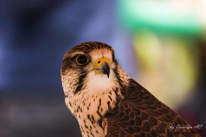 Miradas II / Glances II..... EyeEm Birds Eyeem Fauna EyeEm Best Shots Portrait