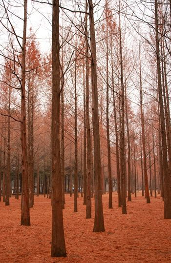 Fir park... Fir Trees Tree Forest Nature Sky Day Growth No People Outdoors Beauty In Nature Garden
