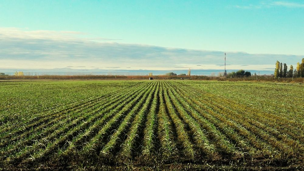 Farms And Sun Garlic! Aire Libre Paisajes Argentinos