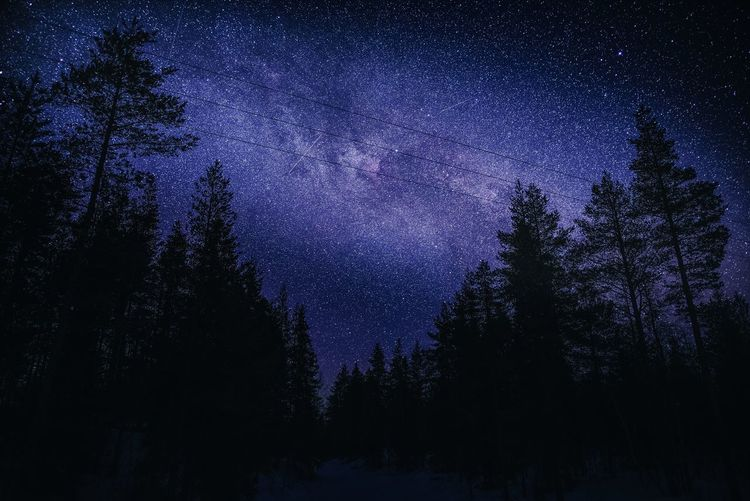 Milky Way and cold winter night Tree Night Beauty In Nature Scenics - Nature Star - Space Sky Tranquility Astronomy Space Tranquil Scene Nature Galaxy Silhouette Forest No People Low Angle View Star Field Milky Way Space And Astronomy Outdoors Exploring Winter Clear Sky Photography Landscape