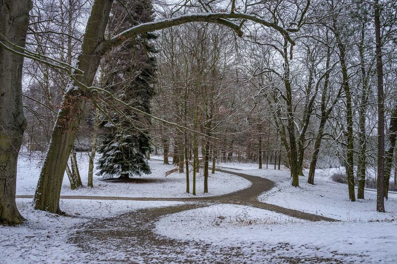 Parkwege Schneelandschaft Wilhelmsthal Winter Bare Tree Beauty In Nature Cold Temperature Day Forest Landscape Nature No People Outdoors Road Scenics Sky Snow Tranquil Scene Tranquility Tree Winter
