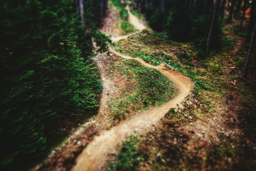 Trees Above The Trees Walk Travel Photography Czech Republic Nature Photography Forest Nature Path Travelphotography Lipno