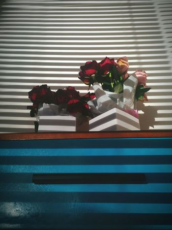 Home Home Sweet Home Wakeup Flowers Light And Shadow Lights Morning Light Relaxing Dontwakemeup