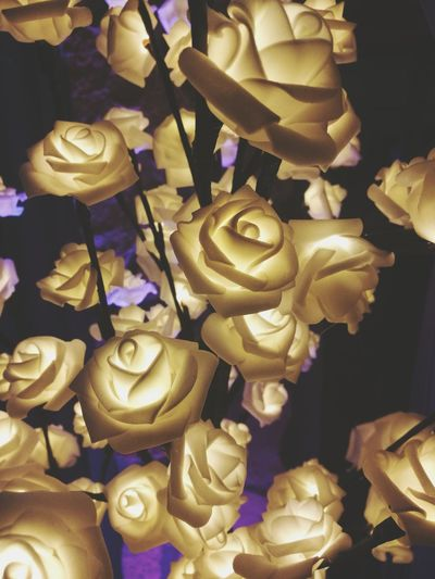 Gold Colored Gold Plant Petal Flower Head Flower Light And Shadow Lights Lighting Equipment Lightning Lightning Flowers Flower Lamp