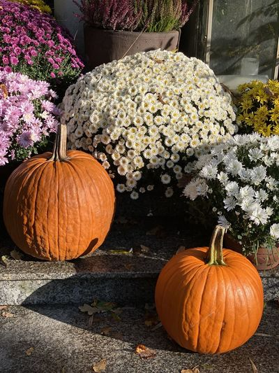 View of pumpkins on plant during autumn