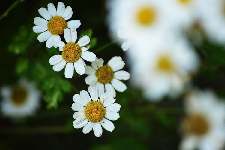Flowering Plant Flower Plant Freshness Vulnerability  Fragility Growth