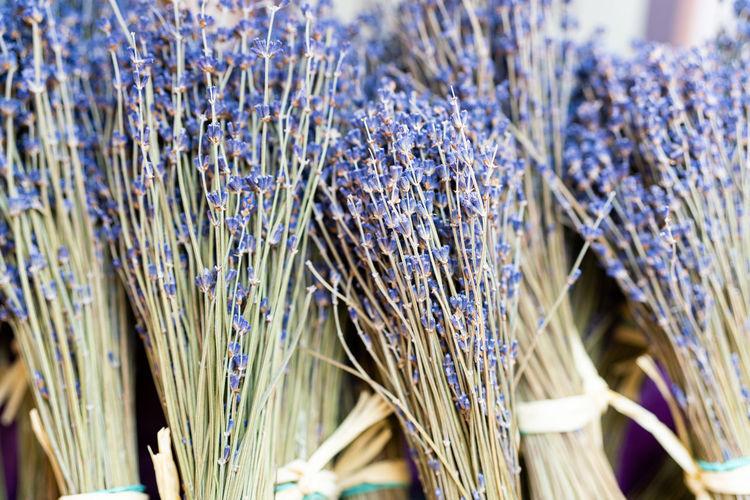 Full frame shot of lavender with plants