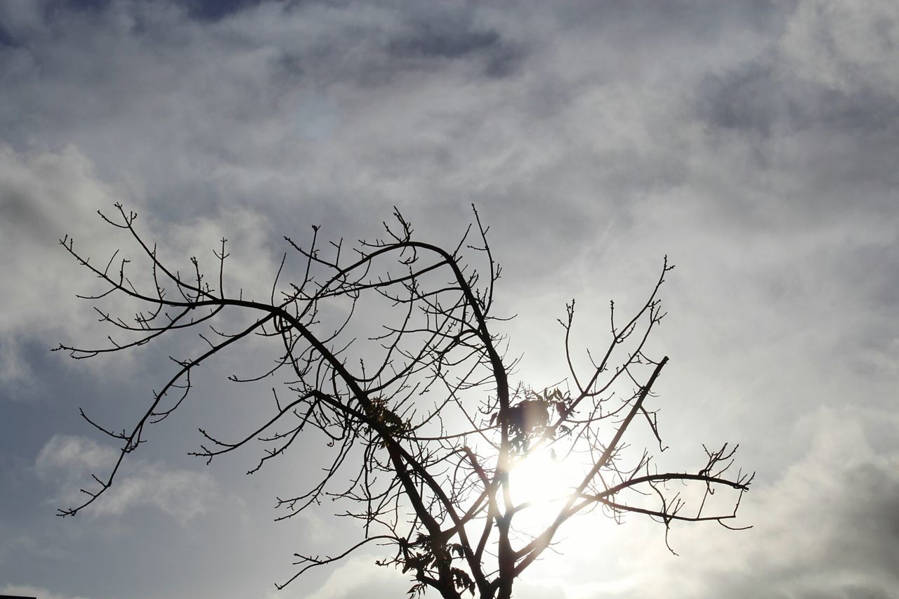 sky, nature, outdoors, low angle view, no people, bare tree, cloud - sky, day, beauty in nature, branch, tree