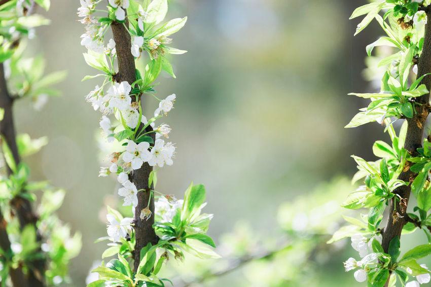 Green Growth Nature Blossom Flower Spring Springtime