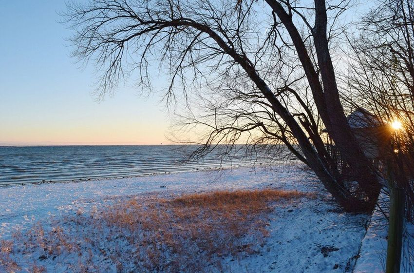 Nature Beauty In Nature Sea Scenics Tranquility Tranquil Scene Water Bodensee Cold Temperature Horizon Over Water Sunset Tree Sky Beach Winter No People Outdoors Branch Snow Clear Sky Seeufer Bodenseebilder