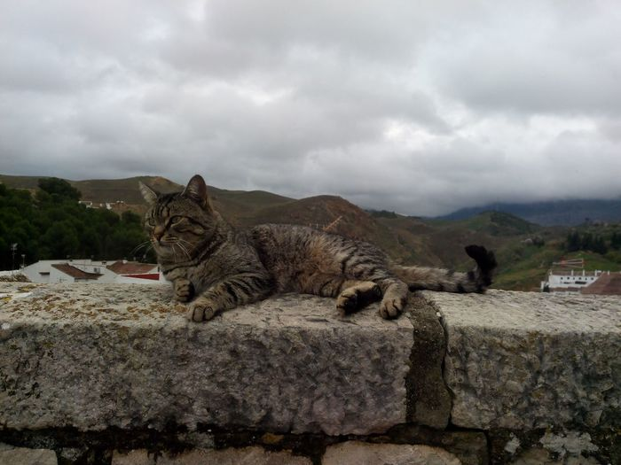 Cat Sleeping Lounge Siesta Animal Sky Relaxing Sky Animal Themes Cloud - Sky Rock - Object Rocky Mountains Rock Formation