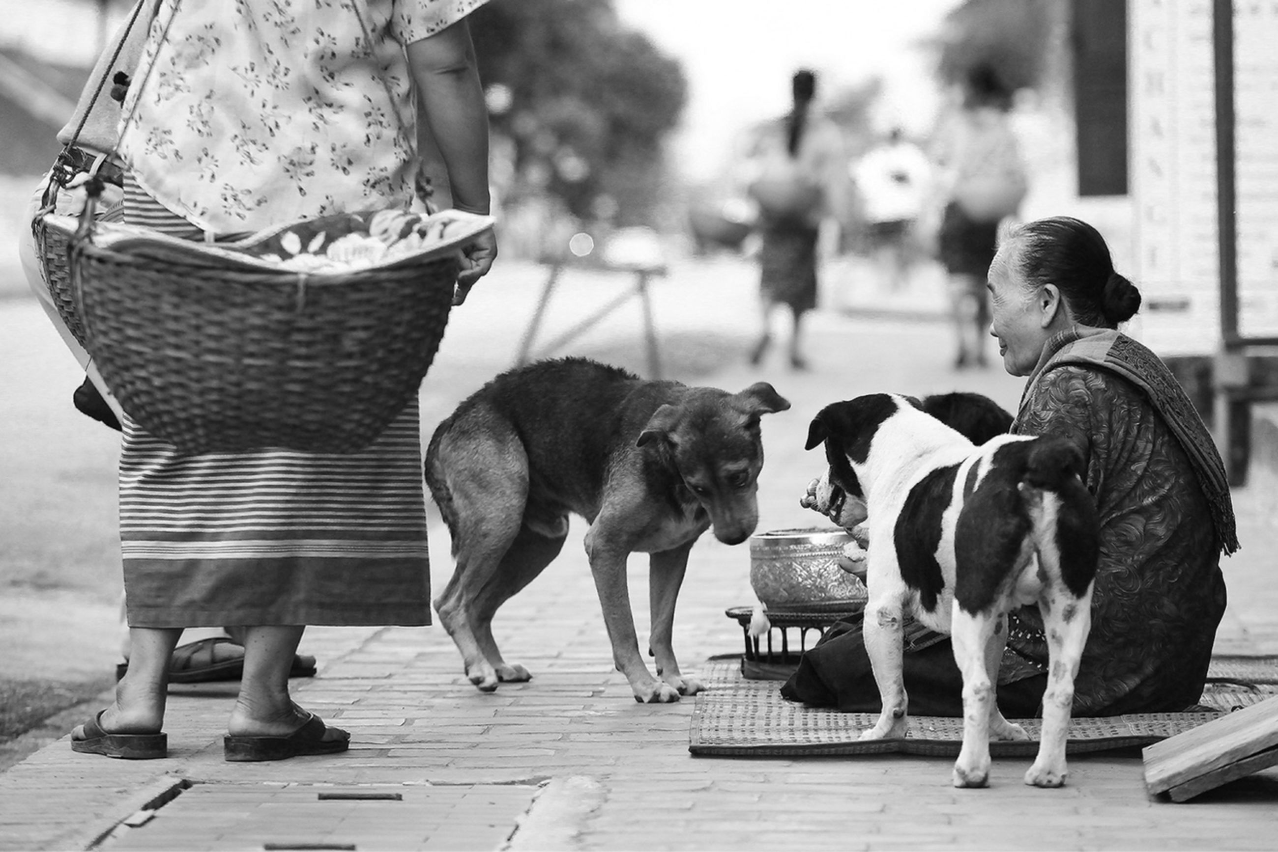 animal themes, domestic animals, mammal, one animal, dog, pets, livestock, full length, focus on foreground, two animals, rear view, person, men, walking, lifestyles, standing, street, togetherness, horse
