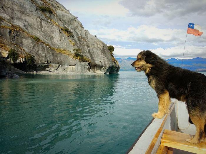 Enjoying the Chilean Patagonia Flag Dog Doglover Traveler Patagonia Chiletravelrepost Southamerica Chile Travelgram Nature Carretera Austral Landscape Qualitytime GetOutThere Outdoors Aysen Marmol Caved Sailing Doglover Boat