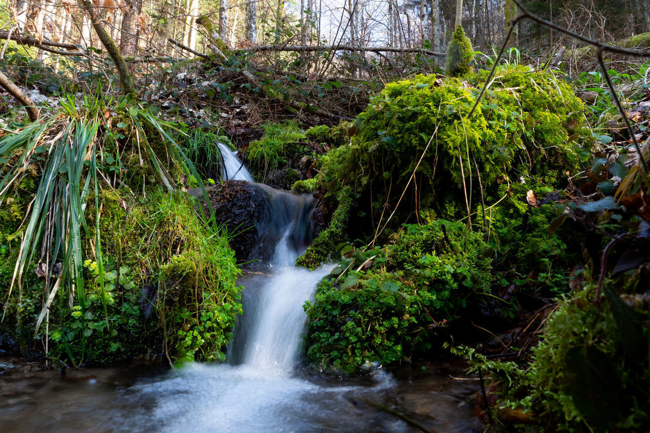 tree, plant, forest, waterfall, water, land, scenics - nature, motion, rock, flowing water, beauty in nature, solid, rock - object, nature, long exposure, growth, no people, blurred motion, moss, flowing, rainforest, outdoors, falling water, power in nature, stream - flowing water