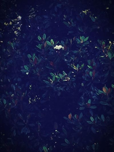 Only white flower on a pecan tree!!! EyeEm Nature Lover