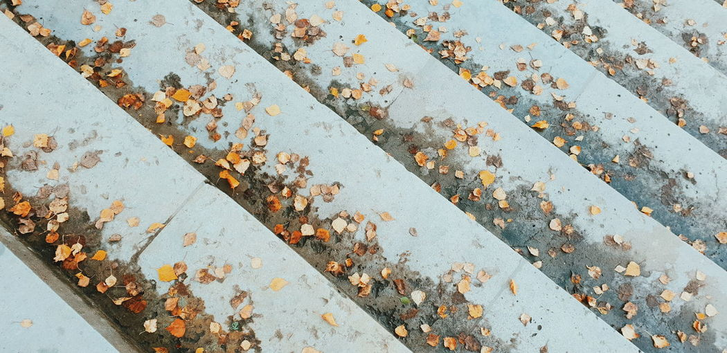 Yellow leafs fall down on the stones. Autumn Yellow Leafs снятонаgalaxy Withgalaxy Park Saint Petersburg Санкт-Петербург Outdoors Backgrounds Full Frame Pattern Close-up Architecture Weathered Built Structure LINE Textured  Leaves