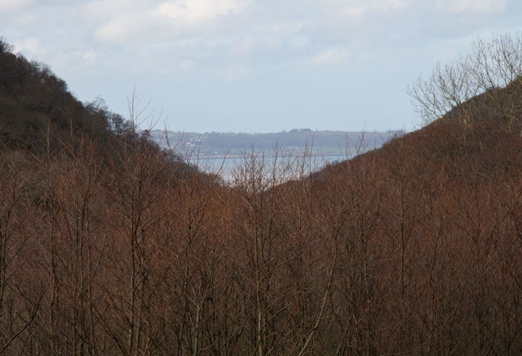 A view of the sea between the slopes of the mountains and through the trees Mountain Mountain Slope Sea Tree Trees Welsh Countryside Wales Forest Sky Scenics Tranquility Calm Countryside Non-urban Scene Remote Coast Tranquil Scene