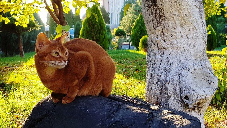 Portrait of cat sitting on tree trunk