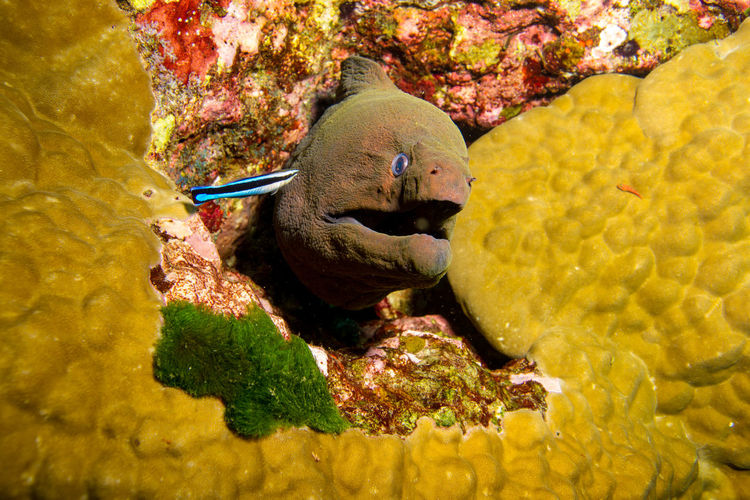 Moray Diving Moray Moray Eel Travel Wildlife & Nature Wildlife Photography Animal Themes Animal Wildlife Animals In The Wild Close-up Day Fish Nature No People One Animal Outdoors Underwater Underwater Photography Water