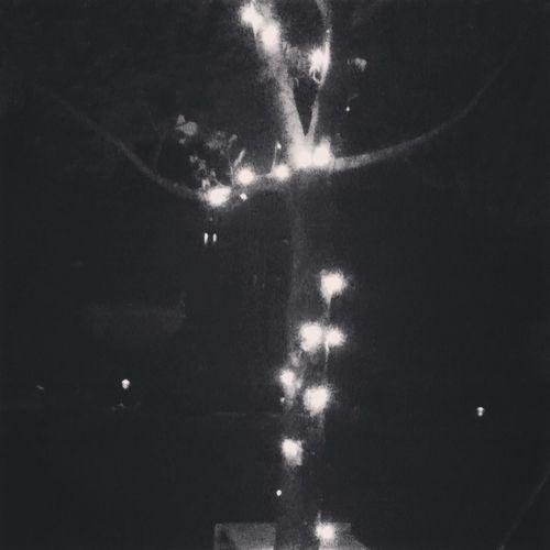 Night Lights Black & White EyeEm Best Shots Beautiful Tree Lights