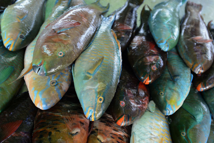 Close-up of food for sale
