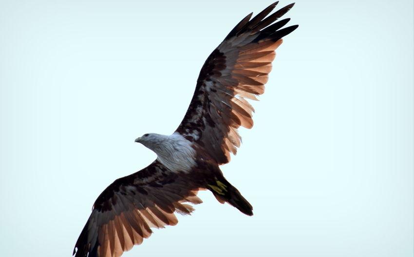 Eagle view Eagle - Bird