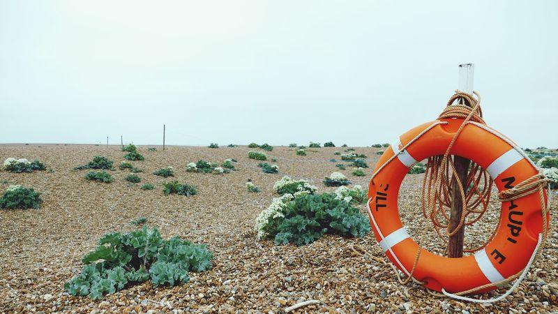 ' Shingle Street III' Shingle Pebbles Stone Life Ring Beach Seaside Shore Shrubs -- B