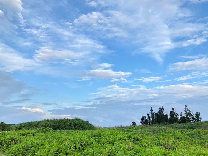 Colors Plant Cloud - Sky Sky Growth Beauty In Nature Green Color Land Field Landscape Nature Rural Scene