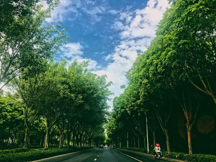 🌳 Tree Plant Road Sky Cloud - Sky Transportation Direction