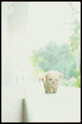 Cute Pets Cute Dog Art #aloneday