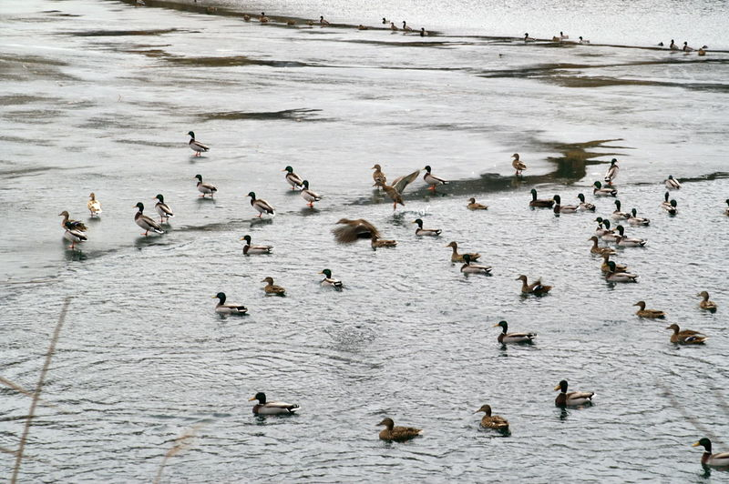 High angle view of ducks swimming on lake