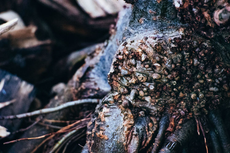 Animal Themes Animal Wildlife Animals In The Wild Bark Beauty In Nature Close-up Day Focus On Foreground Group Of Animals Large Group Of Animals Nature No People Outdoors Plant Rough Selective Focus Textured  Tree Tree Trunk Trunk Wood - Material