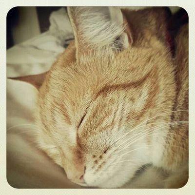 Sleeping Cat Animal Animal Photography South Africa Peaceful Nature Nature Photography Beautiful Cat