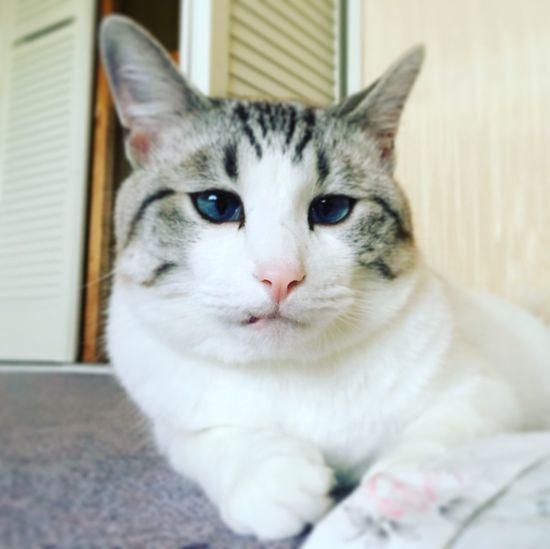 Color Portrait Cat Animals Cats Cat♡ Neko Manekineko Gatto Gatti
