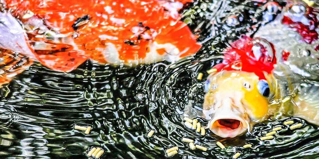 Check This Out Water Colors EyeEm New Jersey Eating Taking Photos Backyard From My Point Of View Fish Walking Around